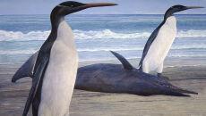 Tak wyglądały pingwiny giganty