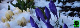 """""""Zima próbuje zatrzymać wiosnę"""". Wasze śnieżne relacje"""