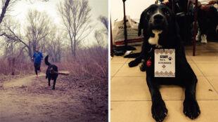 """Pies Eto maratończykiem. """"On jest uzależniony od biegania"""""""